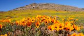 Things to see and do in Namaqualand