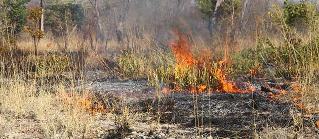 Trusting local knowledge: the case of fire management in a Namibian park