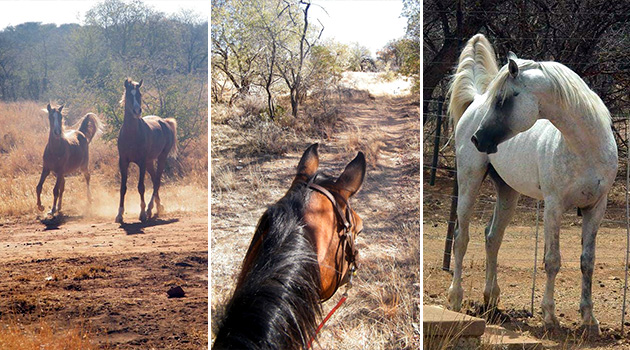 Wendelstein, Farmstay, Horse Trails, Grootfontein, Namibia, Game Farm, Bed & Breakfast, Self Catering, Accommodation, Farm Activities, Wedding Venue