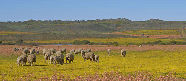 Kamieskroon, in the Northern Cape province of South Africa